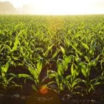 organic-farming-in-Australia-CJD